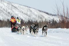 Kamchatka extreme Dog Sled Racing Beringia. Russia, Far East - stock photo