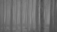 Pan right to left spooky forest tree mist in black and white monochrome.mp4 Stock Footage