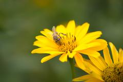Bee flying from flower to flower and pollinate Stock Photos