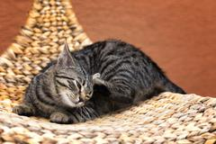 Scraping cat on a wicker chair Stock Photos
