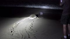 Man on beach taking photo of turtle walking towards sea Stock Footage