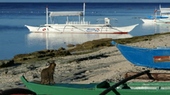 Cat walking at a Catamaran Boat on the beach of Balicasag Island Stock Footage