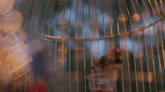 Different canaries in a cage. background with free text space. Stock Footage