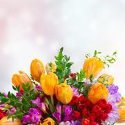 Freesia and tulip flowers Stock Photos
