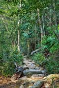 tropical jungles - stock photo