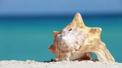 Seashell on caribbean sandy beach Stock Footage