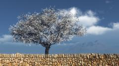 Blossoming almond tree Stock Illustration