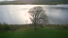 Aerial drone shot of a tree on lake Coniston, Cumbria, in the Lake District Stock Footage
