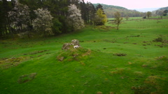 A lone Sheep in the Lake District filmed by drone Stock Footage