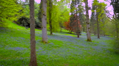 Aerial drone footage flying through bluebell woods Stock Footage