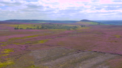 Yorkshire Moors in heather bloom filmed by drone Stock Footage