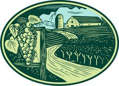 Grapes Vineyard Winery Oval Woodcut - stock illustration