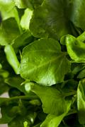 Raw Organic Green Watercress Stock Photos