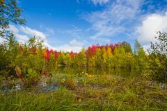 Autumn approaches - stock photo