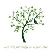 """""""...and a partridge in a pear tree"""" Christmas card in vector format. - stock illustration"""
