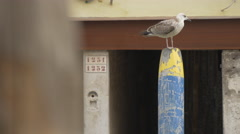 Seagull standing on a blue mooring post in Venice Stock Footage