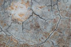 annual ring wood crack damage texture background - stock photo