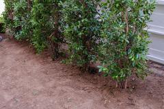 backyard, yard work planting tree and grass in garden - stock photo