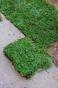 Backyard, yard work planting a new sod grass in garden Stock Photos