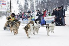 Kamchatka Sled Dog Racing. Russia, Far East, Kamchatsky Krai - stock photo