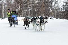 Kamchatka Dog Sled Racing Beringia. Russian Far East, Kamchatsky Krai - stock photo