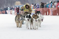 Kamchatka Dog Sledge Race Beringia. Russia, Far East, Kamchatsky Krai - stock photo