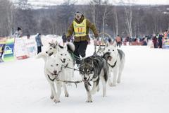 Kamchatka Dog Sled Race Beringia. Russia, Far East, Kamchatsky Krai - stock photo