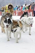 Kamchatka Dog Sledge Racing Beringia. Russian Far East, Kamchatsky Krai - stock photo