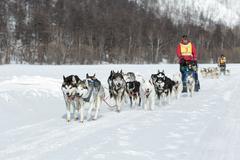 Kamchatka extreme Dog Sled Racing Beringia. Russia, Far East Stock Photos