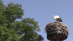 Stork in a nest of wheels Stock Footage