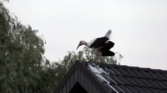 Stork on the roof singing Stock Footage