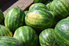 Water-melons on a counter - stock photo