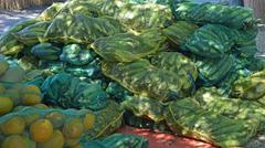 Collect corncobs watermelons and bagging - stock photo