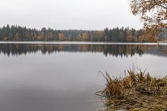 Stock Photo of Nature reserve Kladska peats