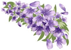 Lavender with leaves - stock illustration