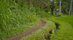 Local laborer carries a load of firewood along narrow path beside rice paddy - stock footage