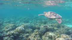 Sea turtle in the tropical sea - stock footage