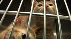 Kitty In Cage At Animal Shelter Stock Footage