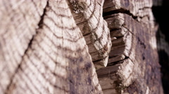 Macro shot of the end of an old log tilting up. Stock Footage