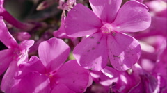 Macro shot of purple flowers. Stock Footage