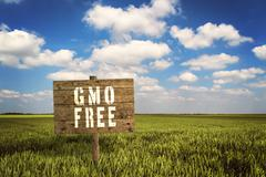 GMO FREE sign on field of rye. - stock photo