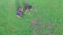 Woman trains sheep dog to sit closer to master on grass field Stock Footage