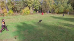 Doberman grasps in hand of instructor with whip at autumn Stock Footage