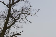 bare tree in winter with gray sky - stock photo