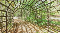 Tunnel among plants in Ostankinsky park at autumn sunny day. Stock Footage