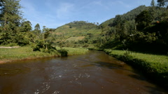 Bwindi national park, Uganda. Stock Footage