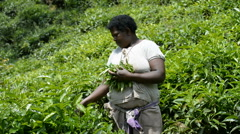Unidentified worker at a tea plantation in the Kambuga, Uganda. Stock Footage