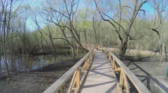 Wooden bridge among trees in national park on Elk Island Stock Footage