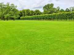 Summer park with a row of linden trees - stock photo