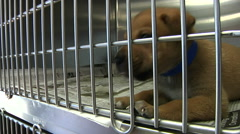 Puppy In Cage At Animal Shelter Stock Footage